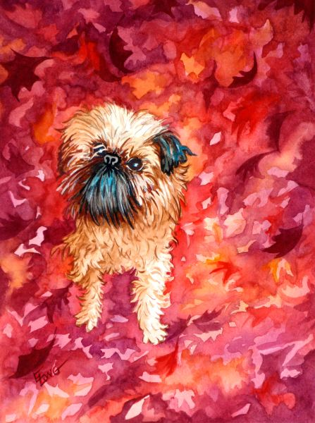 As Good As It Gets – Waffles, A Brussels Griffon
