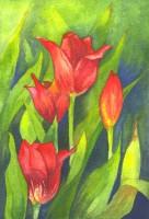 Barnsley Tulips