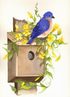Blue Bird  with Jasmine