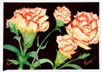 Carnation - Diptych