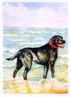 Coby Portrait