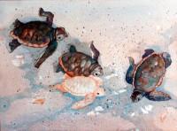 Dash to the Sea - Albino Baby Loggerhead Turtle