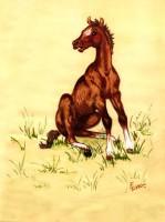 Foal Sitting
