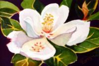 Magnolia Miniature