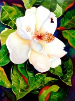 Magnolia - Southern Beauty