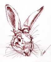 Mr. Whiskers - Pen & Inl