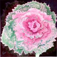 Ornamanetal Cabbage