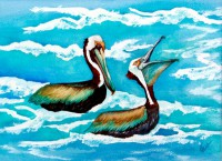 Pelican's Pouch