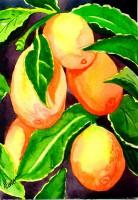Renee's Cumquats