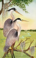Stately Pair - Great Blue Herons