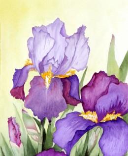 Iris Duette